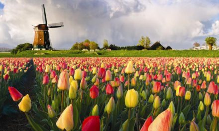 Greetings From Holland (Het Financieele Dagblad).